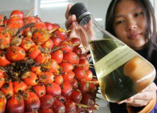 palm-oil-fruits-lab