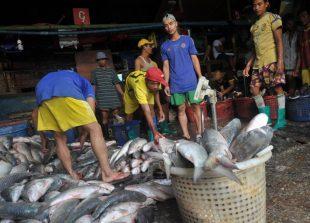unloadin-fish-sanpya
