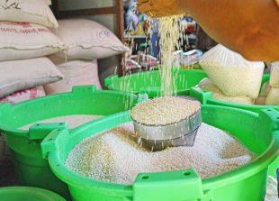maungdaw-rice