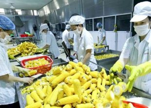 rcep-offers-opportunity-to-expand-vietnamese-agricultural-exports